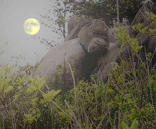 The Moon and The Gorilla in Picnic Bay Magnetic Island Photo: Ture Sjolander 2004
